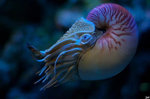 molluscs of australia