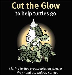 An error occurred.  sc 1 th 230 & Marine Turtles of Australia