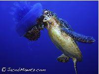 Marine Turtles of Australia